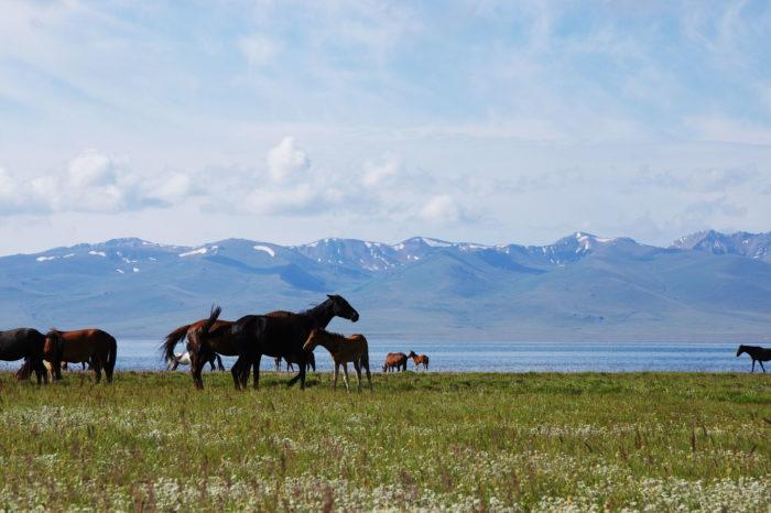 美しき天山の湖ソンコル湖、チョンケミン村で乗馬とキルギスを堪能する5日間